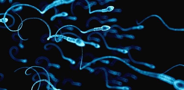 sperm headed toward an egg
